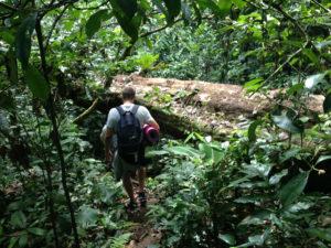 mira v džungli